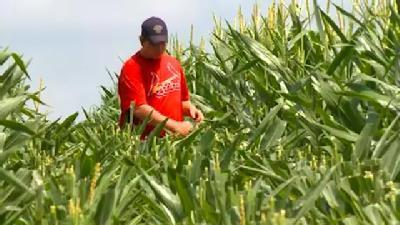 It's One Of The Hottest Summer Jobs In Iowa