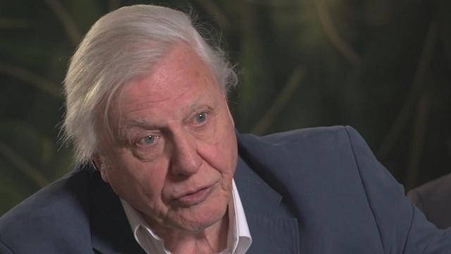 Chimpanzee - Richard Attenborough and Directors Interview
