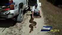 Python found in Everglades could be longest ever