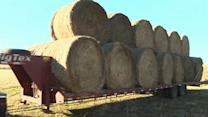 Hay shortage leads to growing hay bale thefts