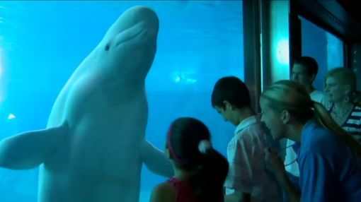 Why SeaWorld Entertainment, Caesars Entertainment, and Steelcase Jumped Today