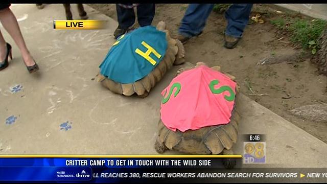 Critter Camp helps kids connect with animals