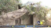 Massive tree damages Reedley dog pound