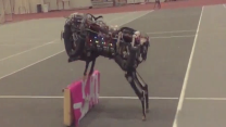 Agile robot is both amazing and scary
