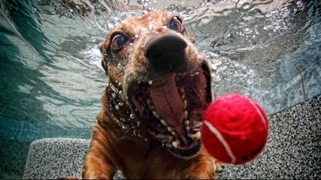Puppy Photographer Makes Big Splash