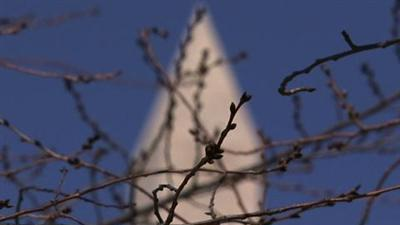 Official: DC Cherry Blossoms to Peak on Time