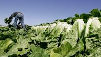 CDC: Leafy Greens Top Food Poisoning Source