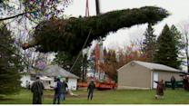 Massive spruce brings Christmas cheer to NJ town