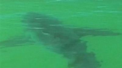 Swimmers Warned After Great White Sharks Spotted Off Cape