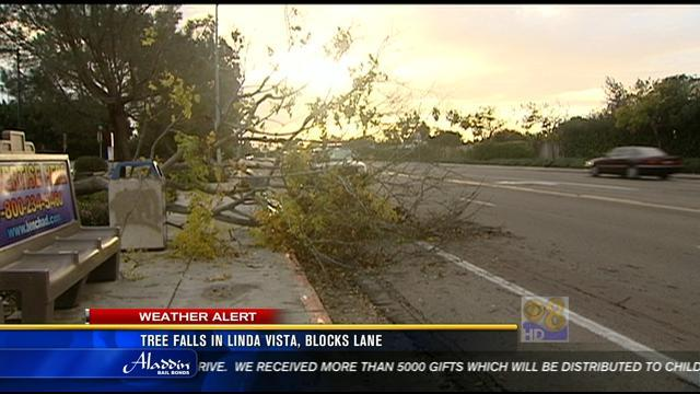 Tree falls in Linda Vista, lanes blocked