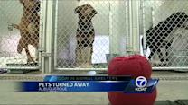 No room at Animal Shelter