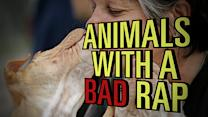 Animals with Bad Reputations:You can't always blame the animals.