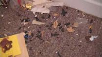 Long Island family blaming rat problem on Superstorm Sandy
