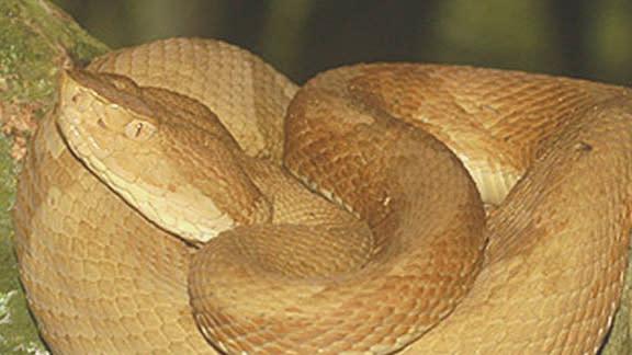 An Island Full Of Venomous Snakes