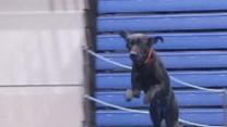 Raw: Iowa Hosts DockDogs World Championships