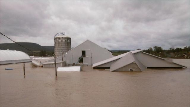 Hurricane Irene Aftermath: The Story of Maple Downs Farm