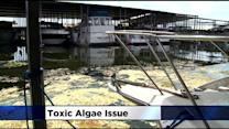 Algae Growing In San Joaquin County Delta Waterways Could Pose Health Risk