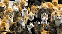 "Cat Island in Japan: ""Meow"" we've seen everything!"