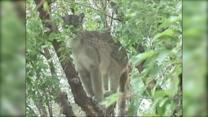 Mountain Lions and Bears Near Homes... Oh My!