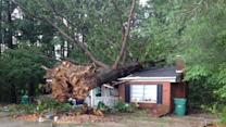 Strong storms uproot trees in some areas