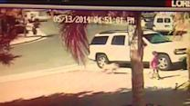 Brave cat saves boy from attack in Bakersfield
