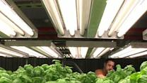 Growing Up: Indoor Farm Goes 'Mega' Near Chicago