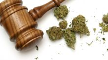 If Any of These Legislative Efforts Get Traction, It Could Be Huge for Marijuana Stocks