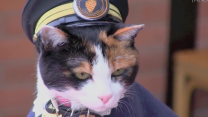 3,000 people attend a cat funeral