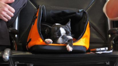 Why it's safer and cheaper not to travel with your pet