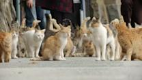 Japanese island overrun by cats