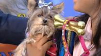 Dog vs. Dog Finals: Misa Minnie Crowned Top Dog