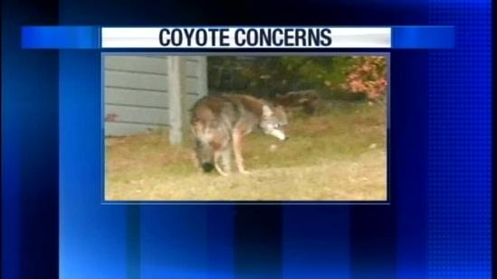 Hundreds turn out for Biddeford coyote meeting