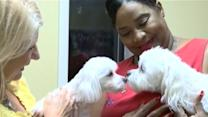 Family Dogs Returned After Groomer Mixup