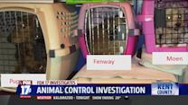 Woman Accused of Hoarding Animals Adopts 20 More Dogs