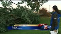 Big trees no match for severe storms