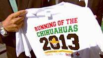 After the Show Show: Running of the Chihuahuas