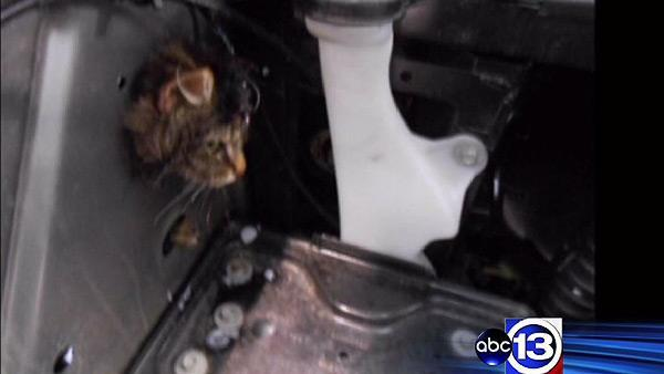 Oil change turns into cat rescue operation