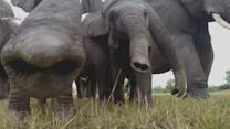 Elephants Seen From a New Perspective