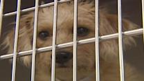 Humane Society warns about puppy mills