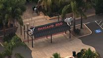 Teenage girl bit by rabid bat at Oakland Zoo