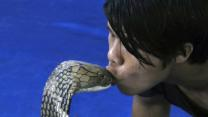 Man Kisses King Cobra
