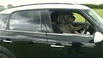 Dog Tricks: Canines Learn to Drive in New Zealand