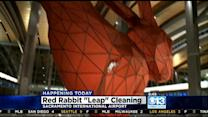 SMF's Big Red Rabbit Gets A Bath