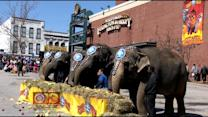 Ringling Bros To Retire Its Elephants, Ending A Tradition
