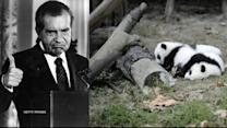NIXON'S INTEREST IN PANDA BEAR SEX