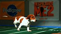 Puppy Bowl IX: Starting Lineup