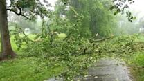 Boy killed by falling tree in VA storm