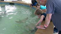 Stingray Touch: New outdoor exhibit opens at the Shedd Aquarium